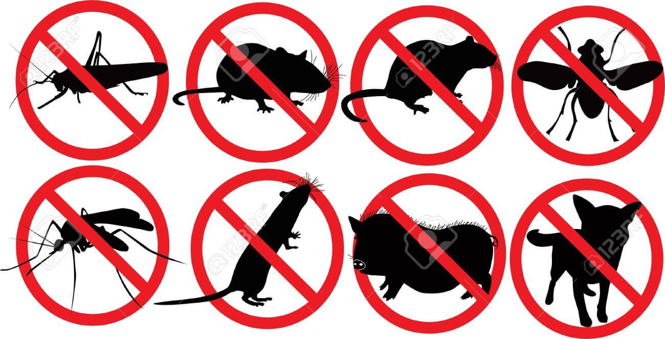 شركة مكافحة حشرات بتبوك